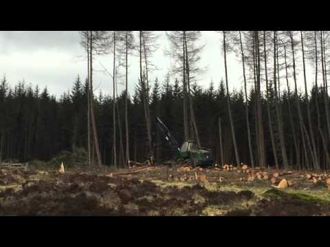 Tree felling with a forestry harvester