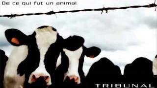TRIBUNAL ANIMAL / Caresse un chat