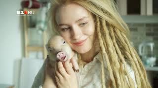 Свинка Джузеппа из Екатеринбурга стала популярней хозяйки