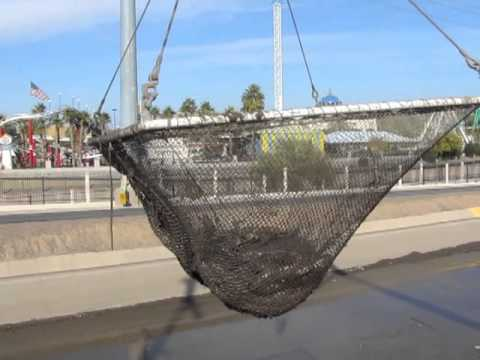 SRP Workers Relocate Fish Before Cleaning Arizona Canal