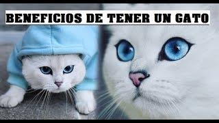 BENEFICIOS DE TENER UN GATO - BENEFITS OF HAVING A CAT - CAT -BENEFITS - CATS