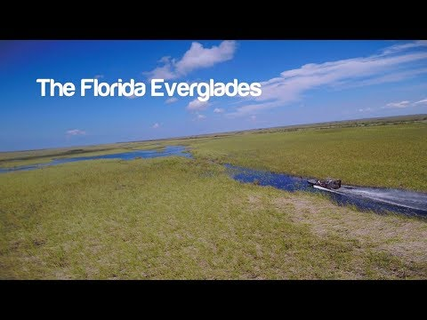 Florida Travel: Tour The Everglades By Airboat