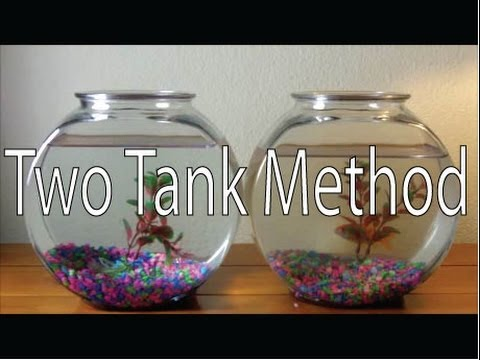 Only way to clean a goldfish bowl diy two tank method how for How to make a fish bowl