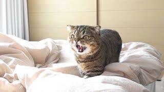 일곱 고양이와 살면 가장 힘든 점