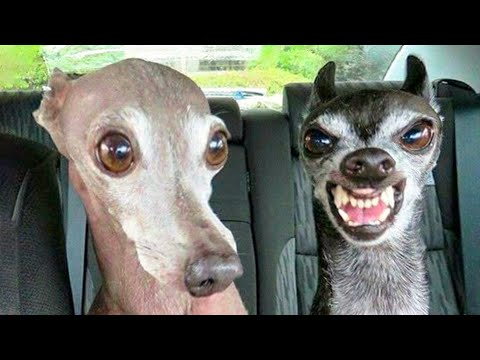 🤣 Funniest 🐶 Dogs And 😻Cats - Try Not To Laugh - Funny Pet Animals' Life 😇