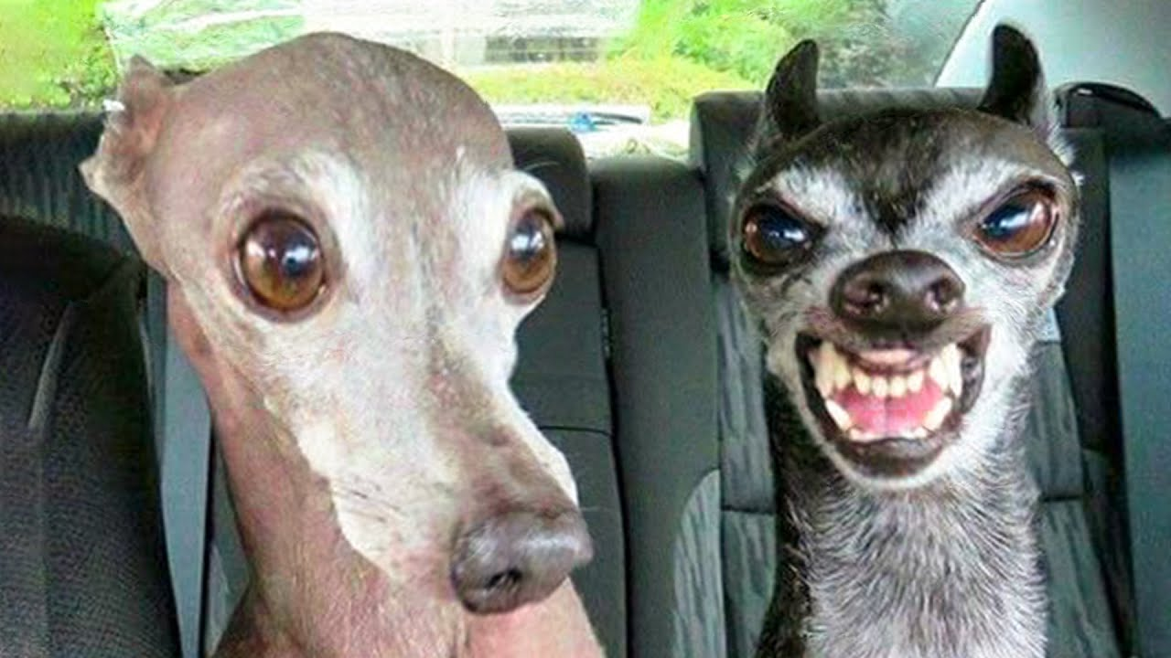 Funniest Dogs And Cats Try Not To Laugh Funny Pet Animals Life Youtube