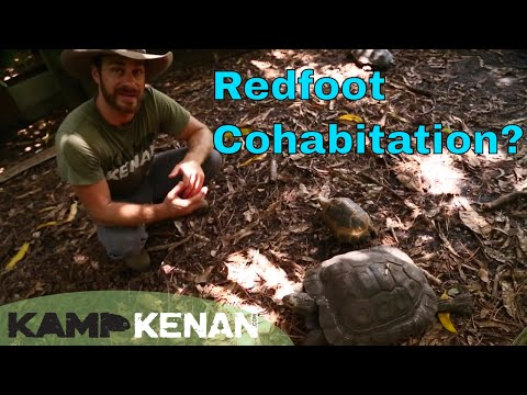 Can Red Foot Tortoises Cohabitate with other Species?