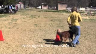 Balance Discs For Obedience & Rally Training