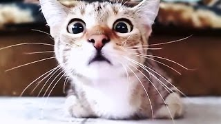 Scared Cats Compilation Part 2