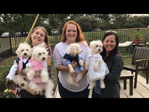 Sherri's VLOG - Stylin Schnoodle Puppies!