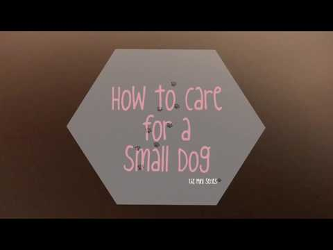 How to Care for a Small Dog Part 2: FEEDING + BATHING + PETSMART