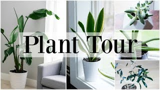 Houseplant Tour | Fiddle Leaf Fig, Monstera | Houseplant Tips For Beginners