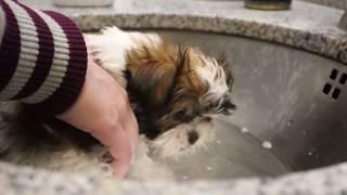Gary The Puppy's First Bath