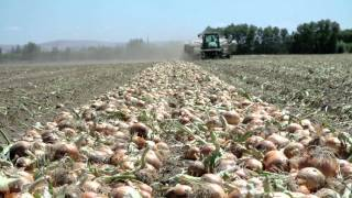 WaGrown Onions S1E5: L & L Farms
