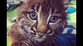 Сердобольная женщина спасла котеночка, не подозревая, кто это на самом деле!