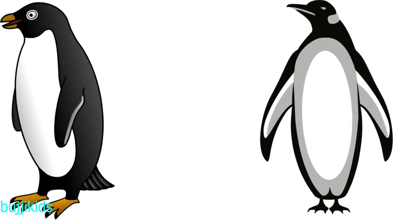 Line Drawing Penguin : How to draw penguin for kids drawing tutorial line