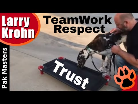 Dog training through trust, respect, patience, and teamwork