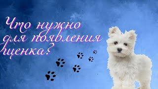 Что нужно для появления щенка или собаки ? / Кристина&Марчик