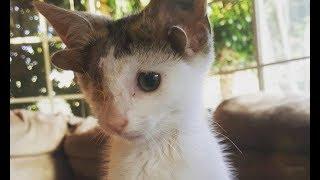 Спасённый котёнок с четырьмя ушами и одним глазом наконец-то перестал страдать и нашёл дом