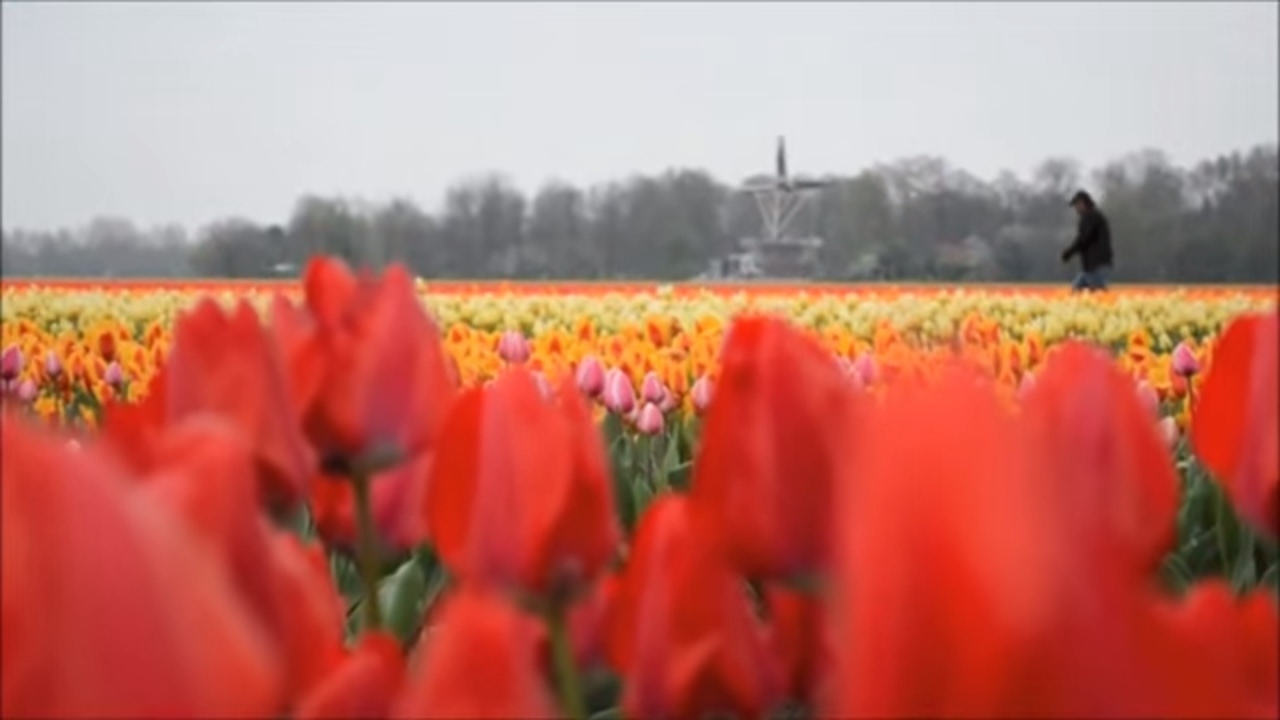 Holland - The Land of Windmills, Tulips and Canals - YouTube
