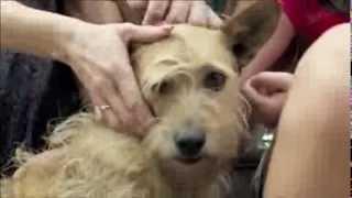 Conheça a emocionante história de Billy, o cachorro pulguento