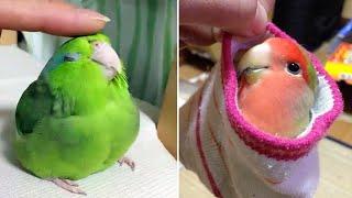 Baby Animals 🔴 Funny Parrots and Cute Birds Compilation (2021) Loros Adorables Recopilación #30