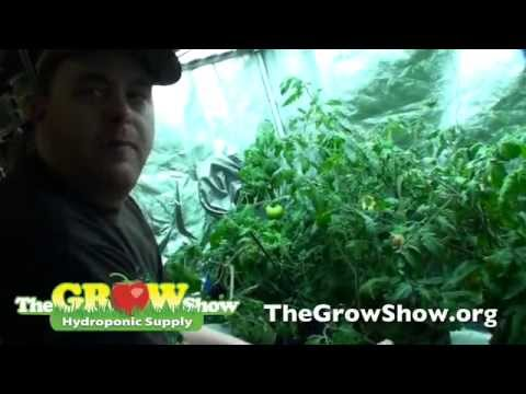 Deep Water Culture Explained - Hydroponic Supplies & Equipment for DWC