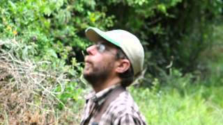 Tim Cockroft calls the Olive Bush shrike