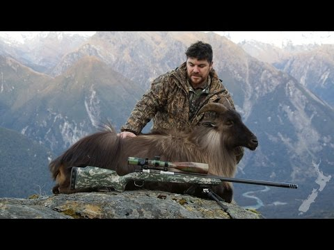 Tahr Hunting NZ July 2016