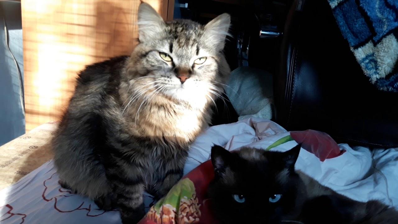 Мы подружились.кот и кошка: Бася и Кэцхен - YouTube
