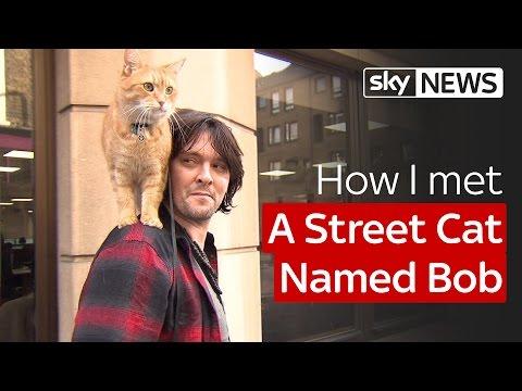 How I met A Street Cat Named Bob