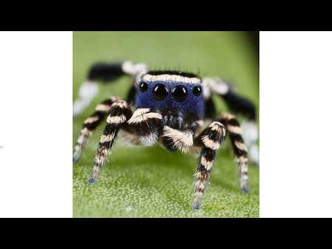 Angry Spiders