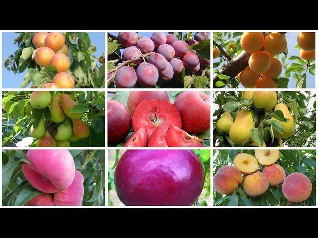 Предзаказ саженцев плодовых на весну 2021года открыт! Какие НОВИНКИ ждут наших покупателей?