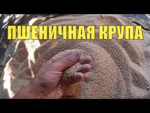 Как выглядит ПШЕНИЧНАЯ КРУПА. Зёрна пшеничной крупы