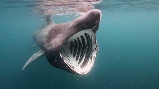 世界最大級のサメ トップ10