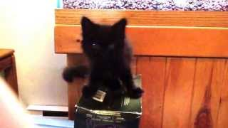 Mute the kitten speaks for the first time!