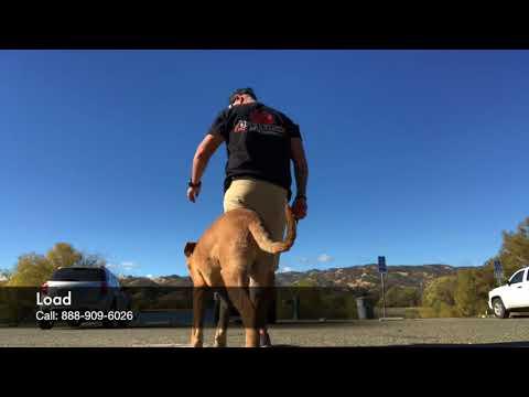 Pit Bull/Rottweiler Mix