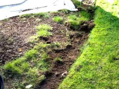 How to Weed a garden bed quickly and easily with the Shrew YouTube