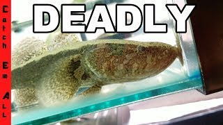 DO NOT put this FISH in your TANK!