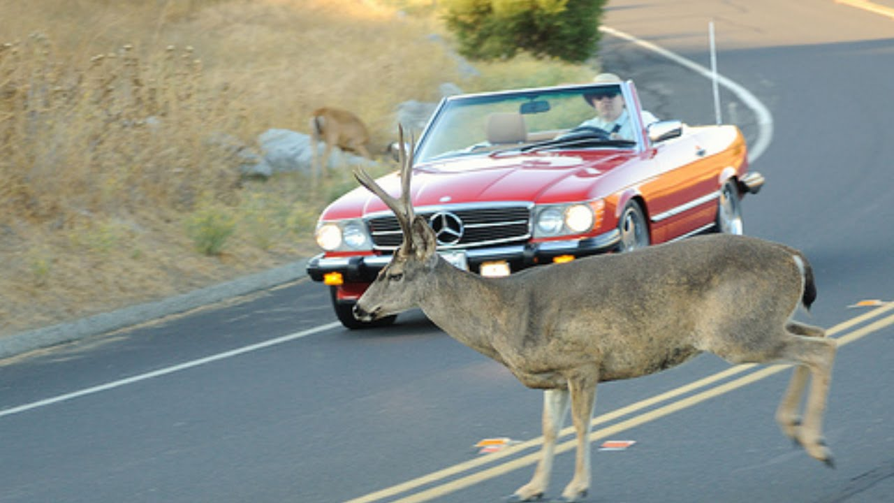 Car Accident Vs Deer Caught On Camera