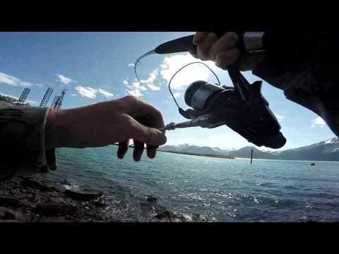 Alaskan Salmon Fishing In Resurrection Bay