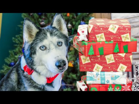Dogs Opening Christmas Presents - Santa Paws Came! Oakley Puppys First Christmas