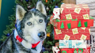 Dogs Opening Christmas Presents - Santa Paws Came! Oakley Puppys First Christmas thumbnail