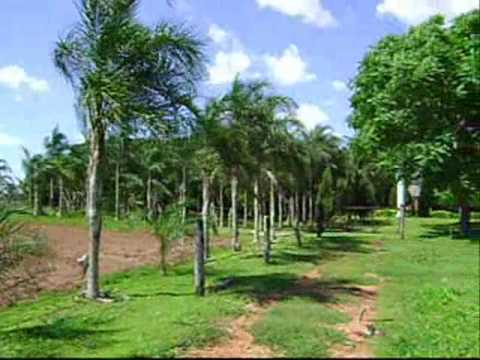 Farm of your Dreams - The most beautiful farm of Brazil