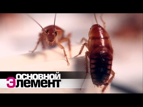 Какие паразиты живут в подушках?
