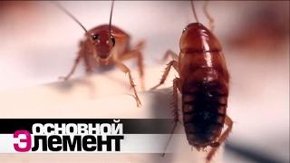 Домашние паразиты | Основной элемент