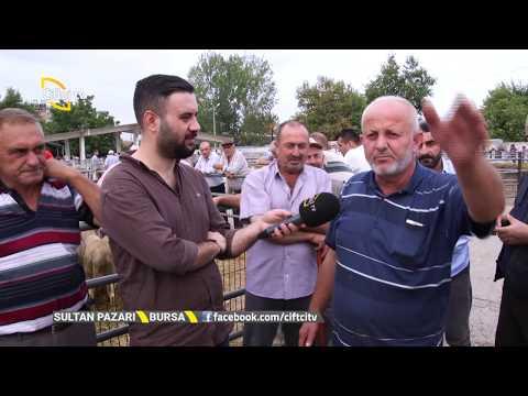 Bu Hafta Bursa Hayvan Pazarındayız - Sultan Pazarı / Çiftçi TV