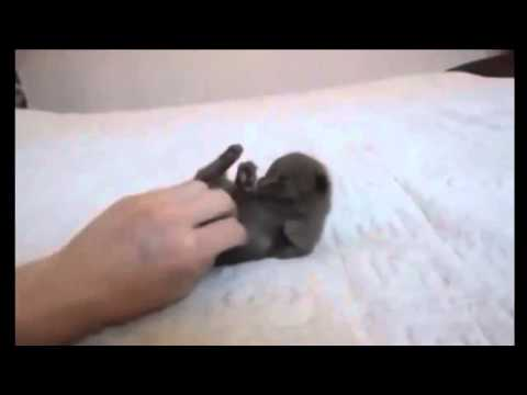 This Cute Kitten Is a Tiny Petting Addict