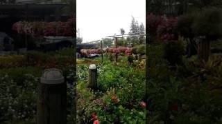 Где можно купить растения и цветы на пхукете