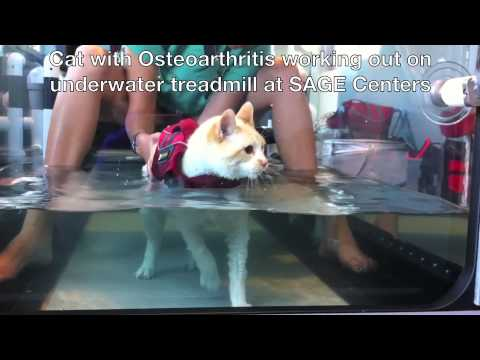 Cat using Underwater Treadmill , Physical Therapy for Animals  www.SageCenters.com